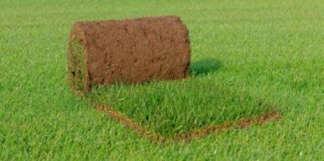 Graszoden rolzoden per stuk 1m²