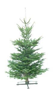 Kerstboom Abies nordmanniana gezaagd 200-225cm kwaliteit excellent