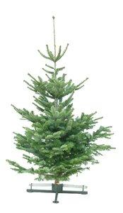 Kerstboom Abies nordmanniana gezaagd 200-225cm
