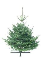 Kerstboom-Abies-nordmanniana-gezaagd--130-150cm